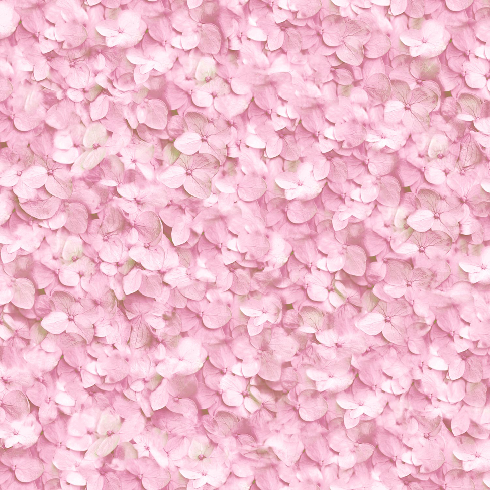 ... Floral Wallpaper Hydrangea Pink L11913 ... - Floral Wallpaper Hydrangea Muriva L119 - MurivaMuriva